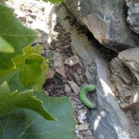 témoin de biodiversité