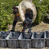 dernière étape à la vigne