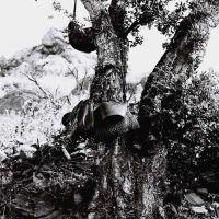 Le déjeuner des vignerons sous le chêne liège
