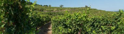 Notre terroir : soleil, vignes et mer